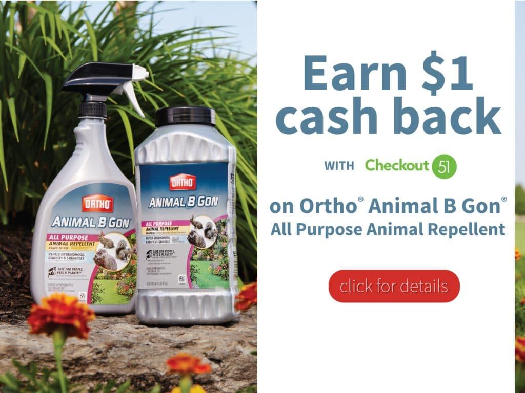 Animal B Gon Deal Blogger Image